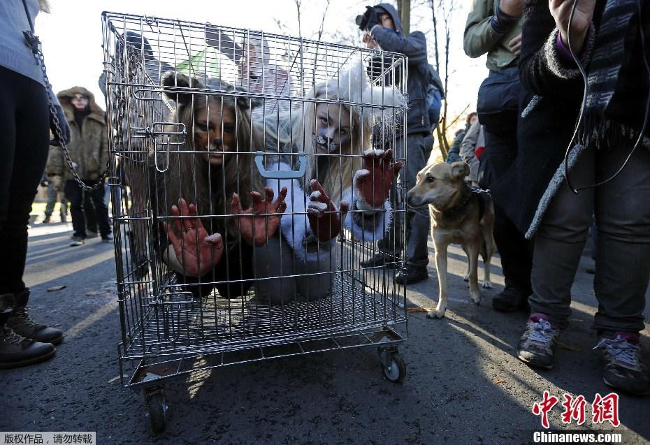 俄皮草变身笼中按键街头抗议使用野兽(美女)vivoy13如何用组图刷机图片