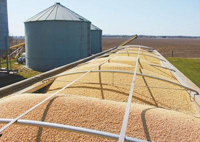 伊利诺伊州的农场上一辆载满大豆的货车。本报记者 郑 琪摄