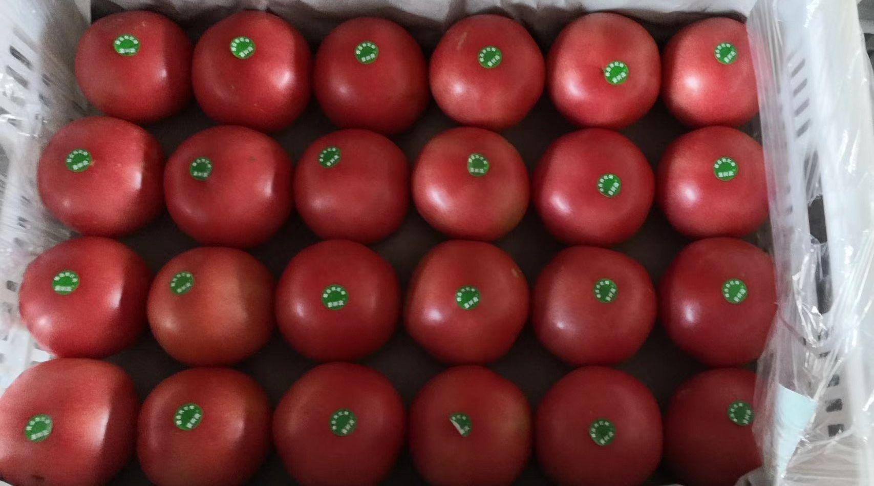 西红柿价格持续走低 预计近期仍在低位徘徊