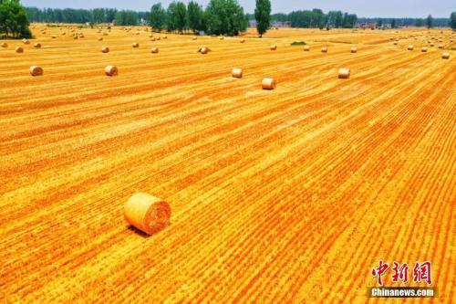 近日,皖北平原许多小麦种植区,进入收割期。航拍视角之下,麦穗映衬着骄阳,色泽格外金黄,微风过处,麦浪滚滚,宛如金波。轰轰响的收割机穿梭在麦田中,为农民丰收助力。刘浩 陈杰 摄