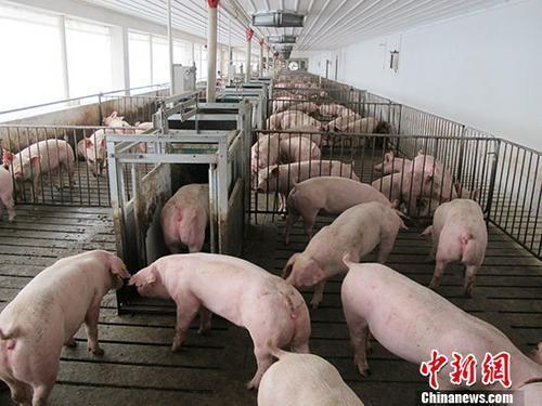 三部門:進一步加大對生豬穩產保供工作支持力度