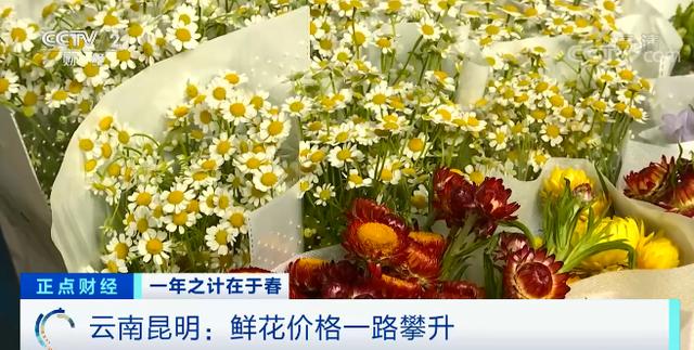 昆明鲜花市场价格涨了四倍!销售商不敢多备货 多种鲜花价格也在攀升