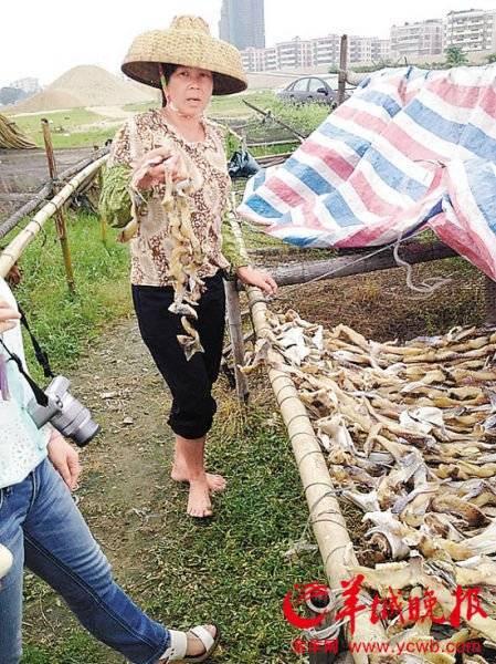 """<p>女子手拿鱼干表示,她家的鱼干""""很靓""""</p><p>涉案渔民</p><p>承认生产的鱼干的确来源于死鱼</p><p>据了解,两名涉案的渔民一男一女,分别来自肇庆四会、三水芦苞。据三水区市场监管局的初步调查,来自四会的陈姓渔民承认其生产的鱼干的确来源于死鱼,从亲戚手中拿回来制作。生产出来的鱼干成品都是散货,未经包装,曾有三水本地人向其购买,剩余的大部分经长途汽车运往肇庆市广宁县。</p><p>有关负责人表示,究竟涉案人员加工了多少问题鱼干,已流入市场多少,仍需经过公安部门调查。据了解,目前广宁县的鱼干已全部封存并禁止销售。</p>"""
