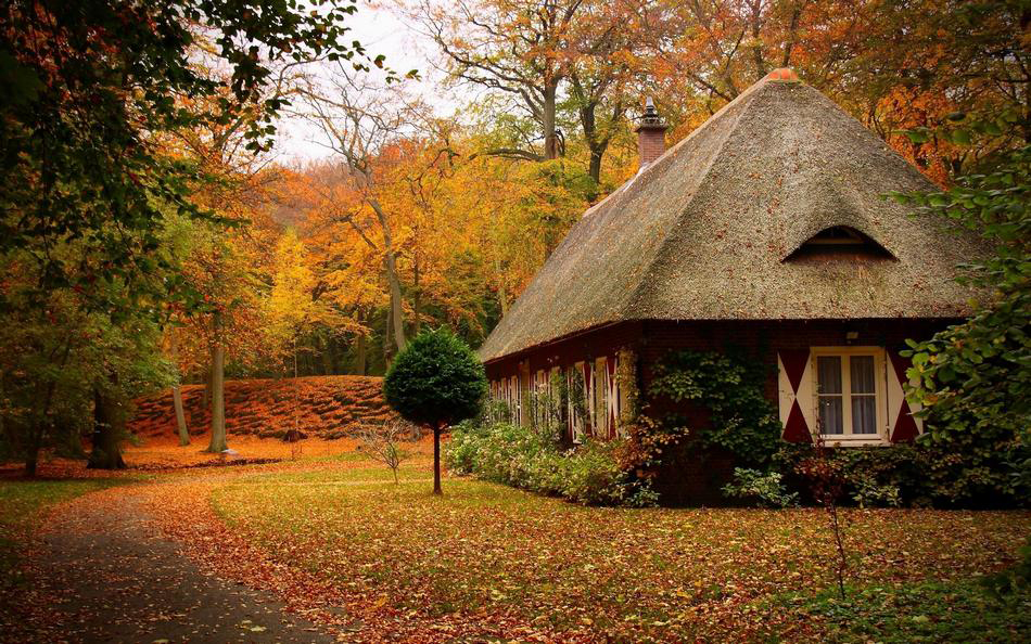 森林中的房子是個理想去處.沒有時鐘,沒有時間表,也沒有日程安排.