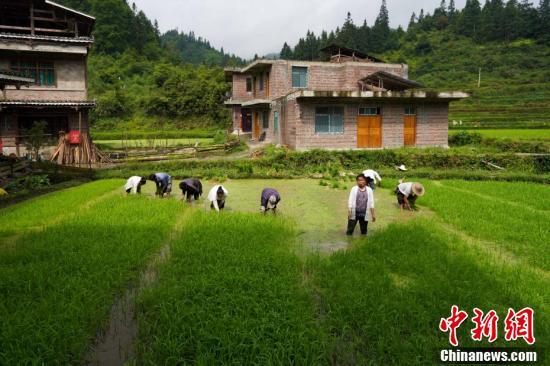 芒种节气将至 民众在田间劳作盼望2019年丰收
