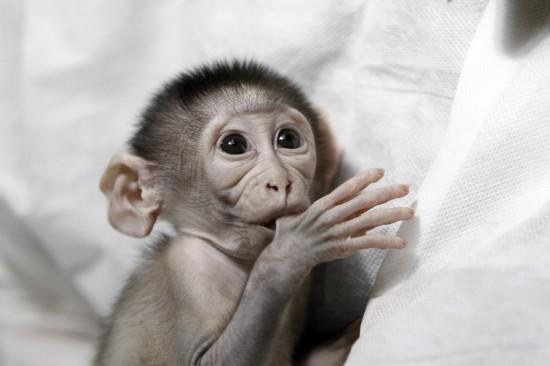 动物园里的新生宝宝 呆萌瞬间惹人爱(组图)