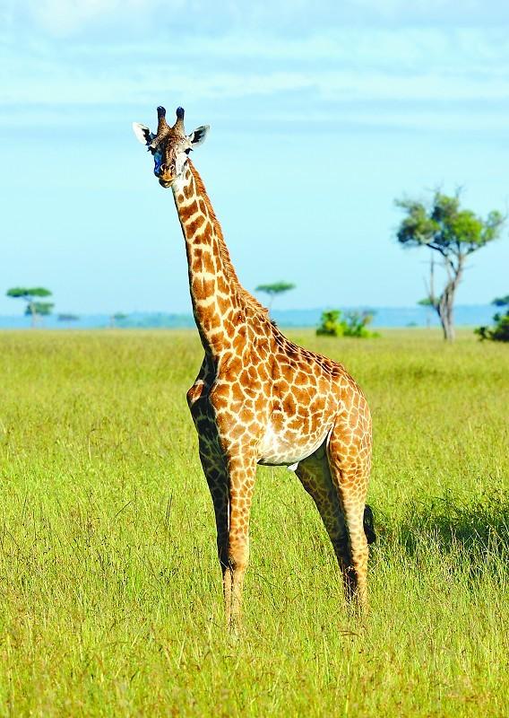 肯尼亚多彩耀眼的非洲之心