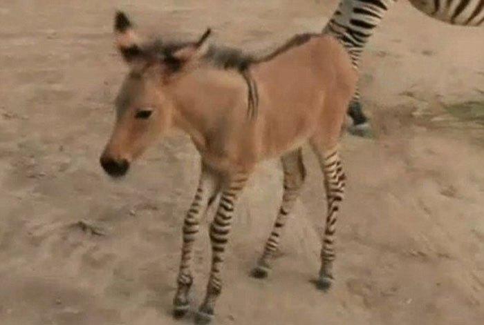 带条纹的动物幼儿作品