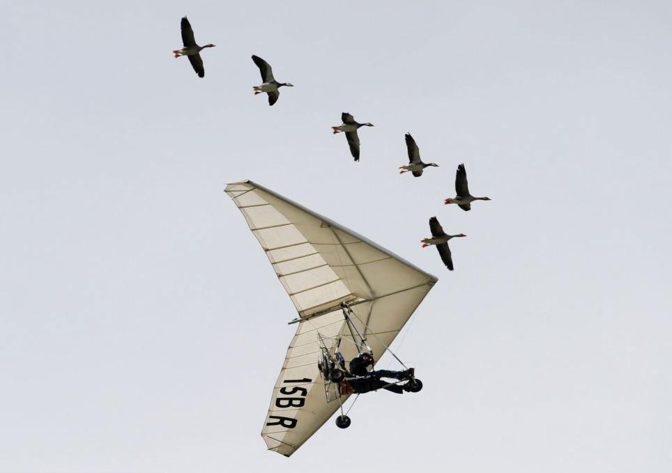 法男子驾超轻飞机与大雁群共同飞行15年 场面壮观 组图