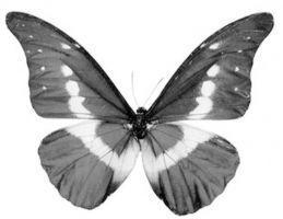 民间玩家收藏蝴蝶:和美丽相约