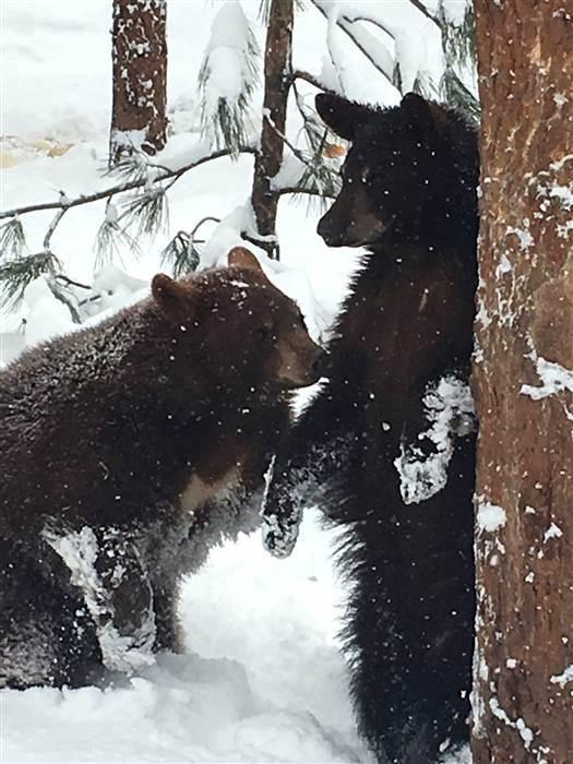 雪地里动物的脚印