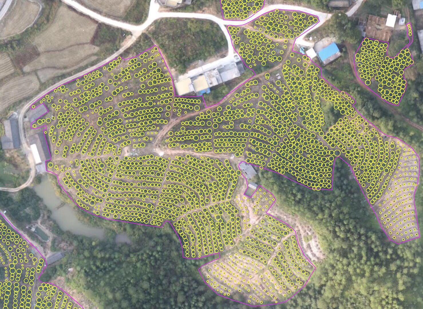 XAI 基于无人机高清图像自动识别果树定位